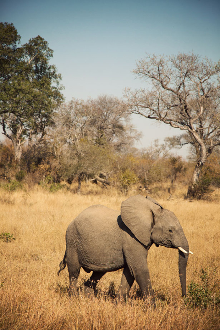 SafariAfternoons_29