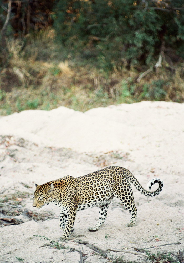 SafariAfternoons_24