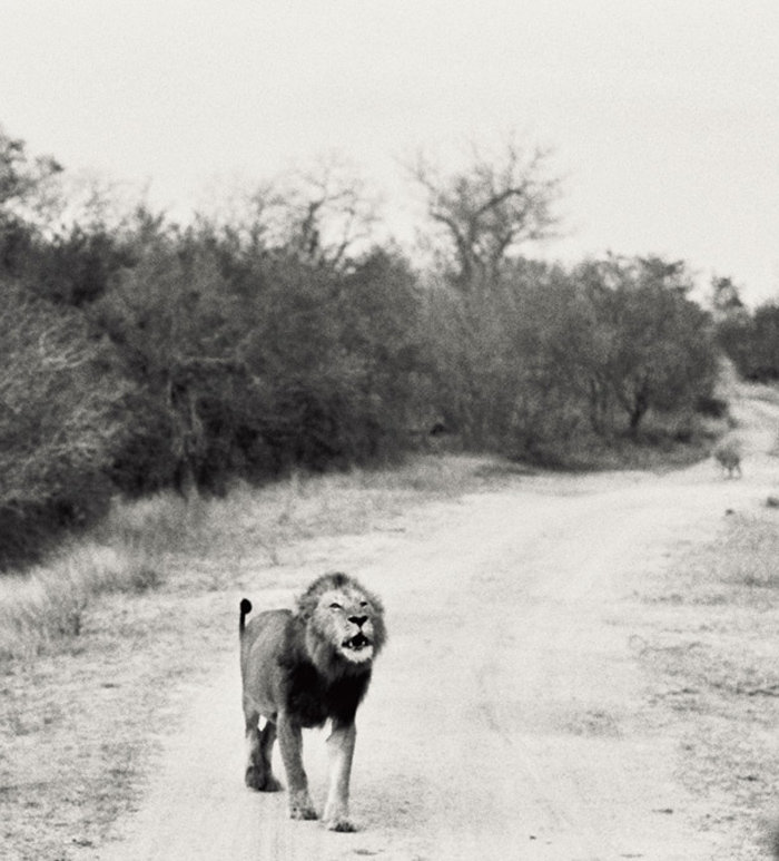 SafariAfternoons_14