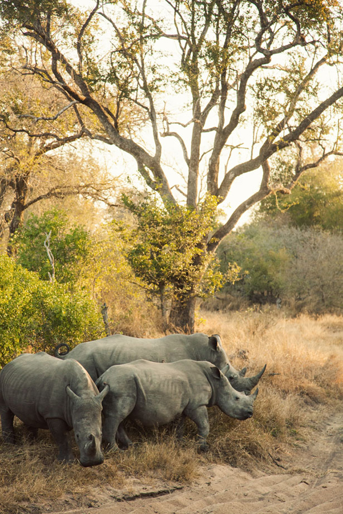 SafariAfternoons_08