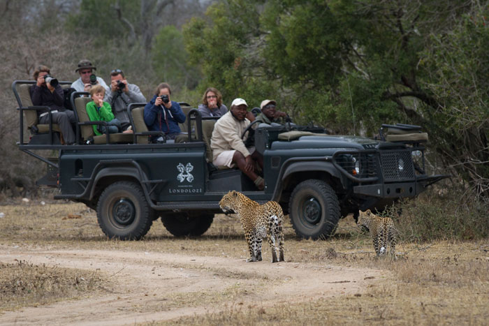 Sandros Sihlangu and guests enjoy a wonderful view of the Tamboti female and her cub.