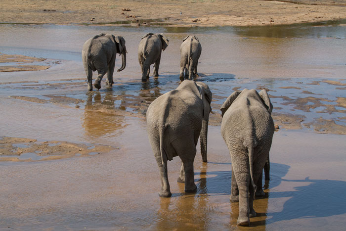 This point in the Sand River is rather appropriately named 'Old Elephant Cossing. Go figure.