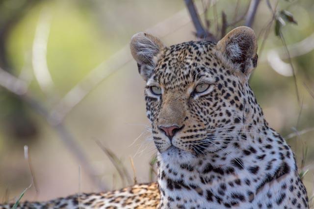 The Nanga female in all her beauty.