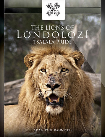 The Lions of Londolozi - Tsalala Pride