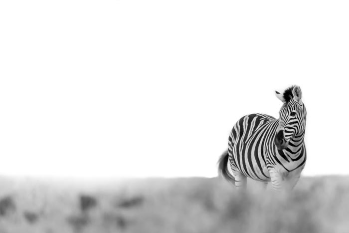 Some creative Zebra shots. (ISO 800 f 5.6 1/250sec 400mm)