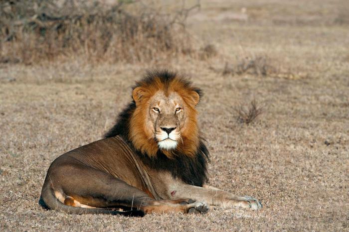 _0011_sandy-butter-hue-sat-final-lion
