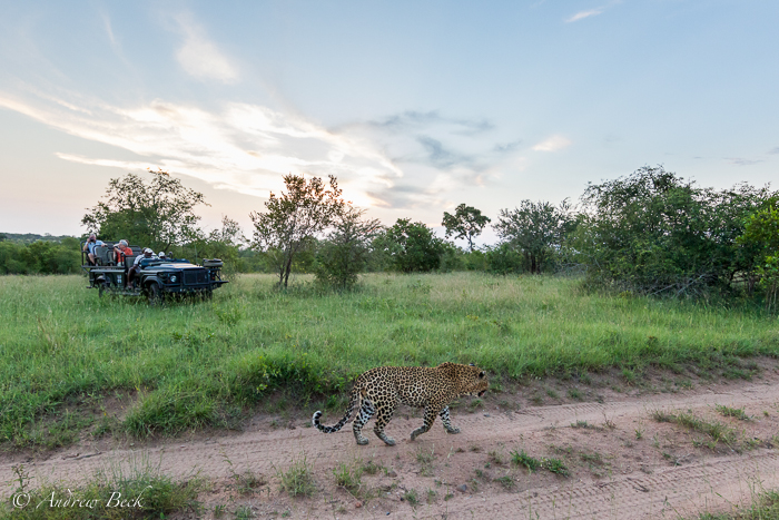 The-Human-Element-of-a-Wildlife-Safari-2
