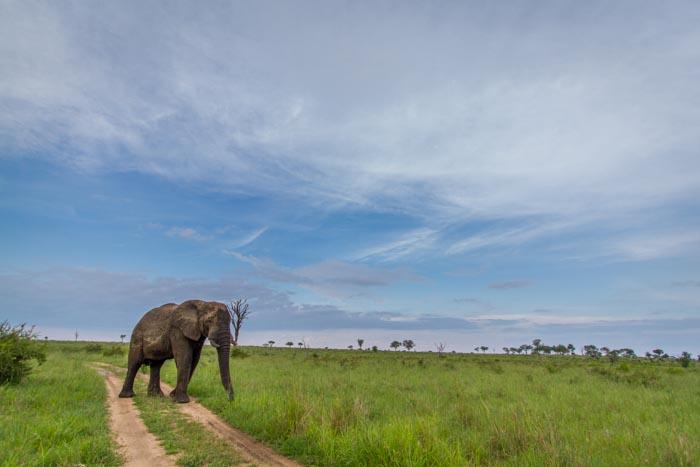 More Elephants filling up my camera.