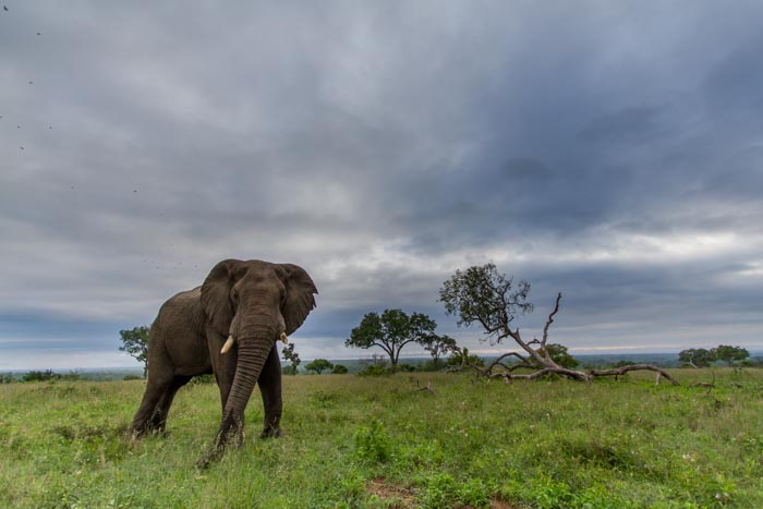 Elephants and clouds, my focus for the week photographically.