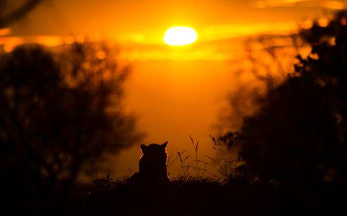 Nothing beats a beautiful sunset, besides a Leopard. Trevor McCall-Peat (ISO 100, f 2.8 1/8000sec)