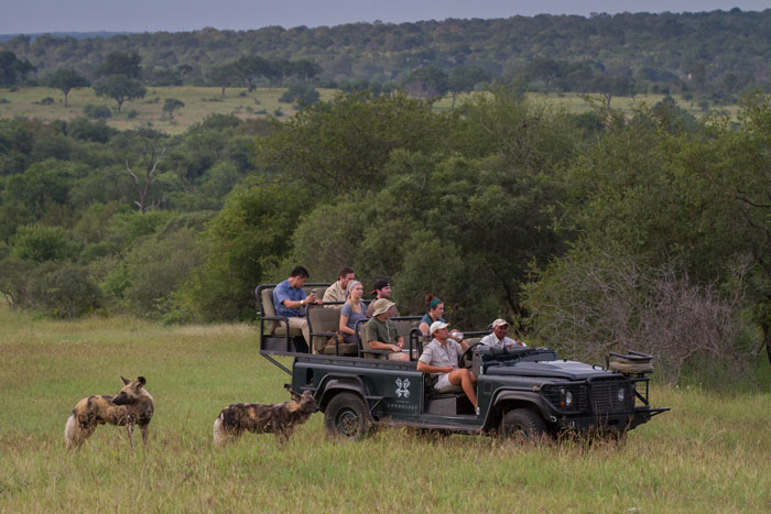 Rich Burman takes a much needed sip of water during the excitement of a wild dog sighting. The pack had been running everywhere in pursuit of impala, but got a nasty shock in the form of the Tsalala Pride lying up just near camp. They were chased by the young lioness for a good few hundred metres but made their escape unharmed.