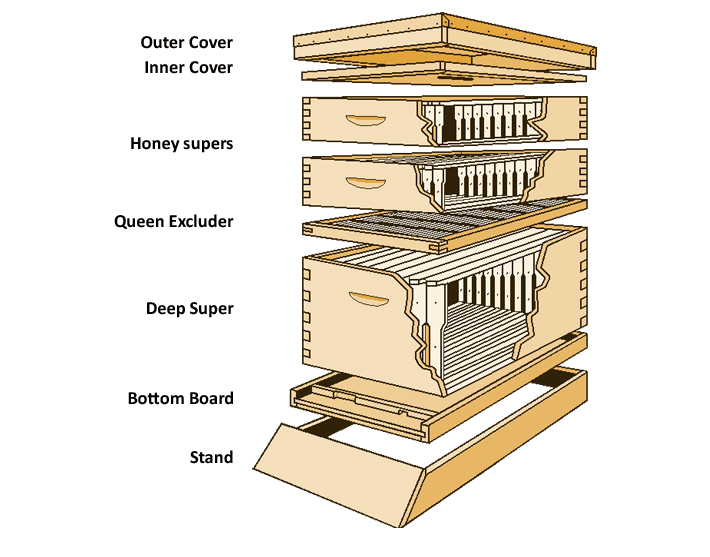 Langstroth Hive courtesy of Google Images