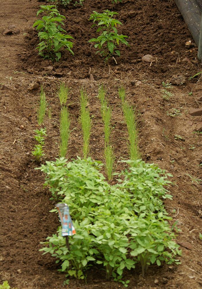 Londolozi Vegetable Gardens
