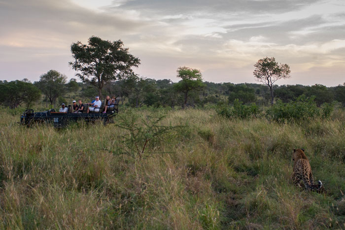 Pausing before breath, the leopard drags his kill down towards the drainage line while ranger Simon Smit, tracker Jerry Hambana and their guests look on.