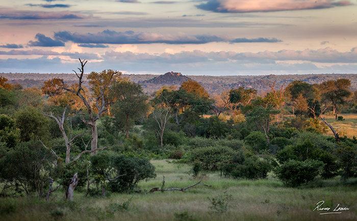 Londolozi Game Reserve - Rich Laburn