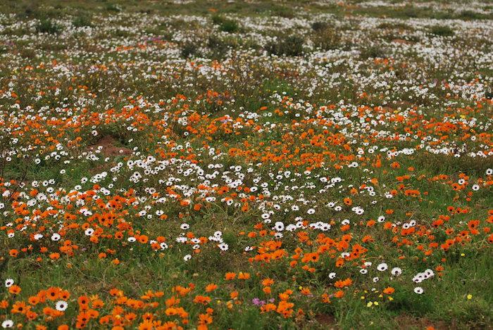 West Coast Flowers