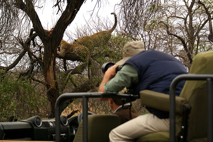 Guest Photographing Leopards
