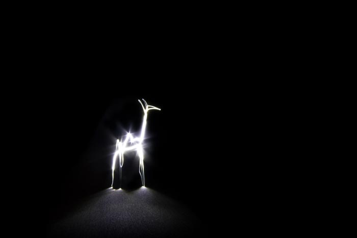 A Giraffe drawn with light.