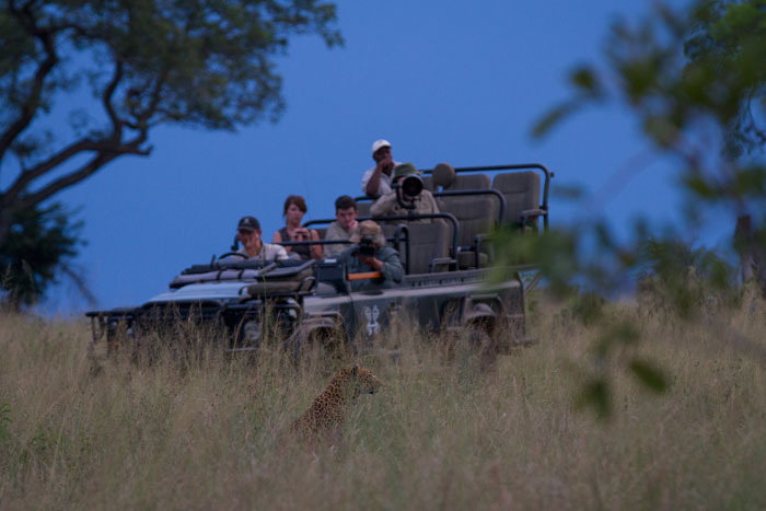 John Varty joins ranger Tom Imrie on a specialist Big Cat Photographic Safari. Here they watch the Tutlwa female in the fading light on the open Marula crests in the North. James Tyrrell