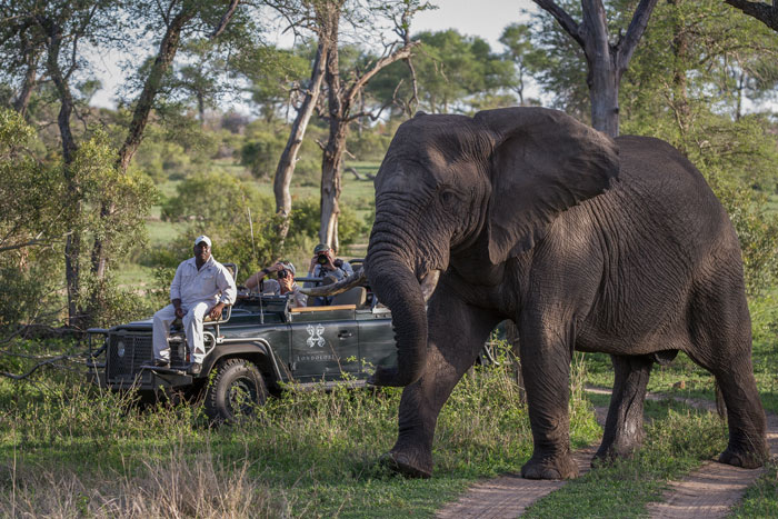 Ranger Don Heyneke and guests have a close encounter with a magnificent elephant bull. The elephant was simply feeding through the groves, showing no interest in the vehicles nearby.