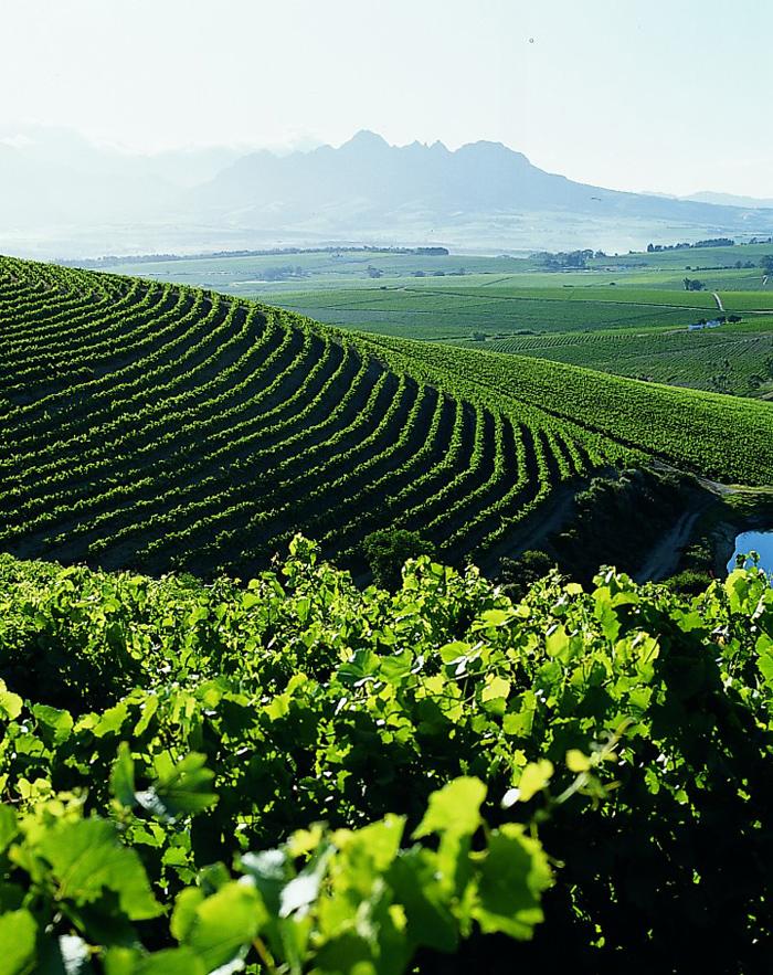 The beautiful Jordan vineyards.
