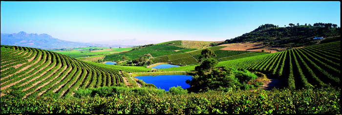 The Jordan wine estate, well-known for their Noble Late Harvest