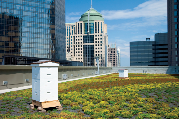 A Langstroth Hive in the the Ritz-Carlton's rooftop vegetated garden.