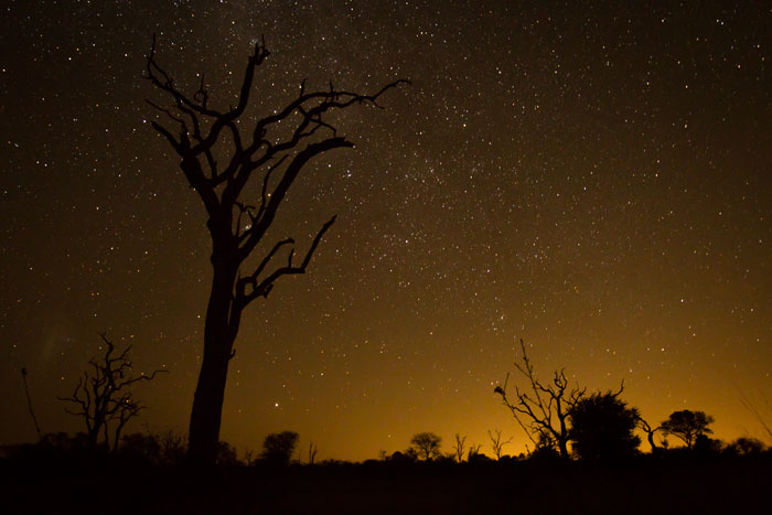 The Southern Skies provide a breathtaking backdrop to this dead Leadwood tree near the Maxabene Riverbed.
