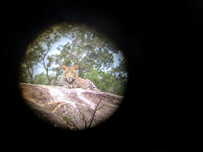 The Tutlwa young male through my binoculars.