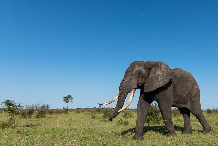 Elephant Angles