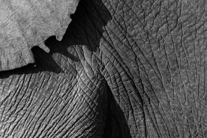 Elephant Angles-7