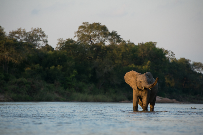 Elephant Angles-6