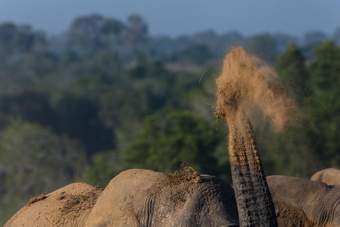Elephant Angles-5
