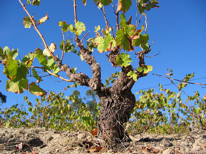 THE-SADIE-FAMILY-PALLADIUS-OLD-VINES
