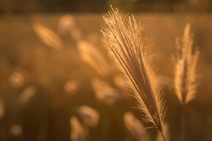 The withering winter grass in the first light of day. ISO 800, f16, 1/160. By Simon Smit