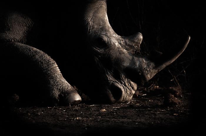 Rhino Shadows