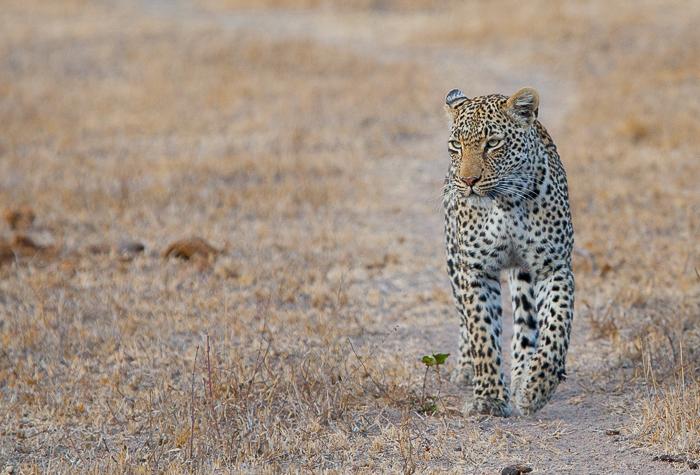 Nanga Patrols her territory