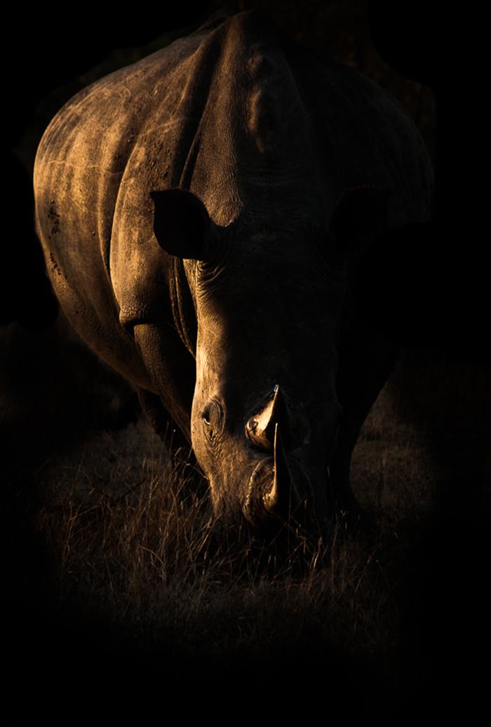 rhino-blog