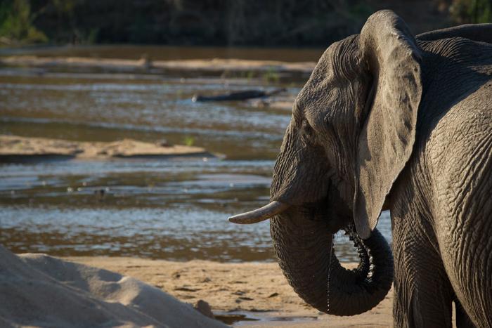 ElephantFinfoot