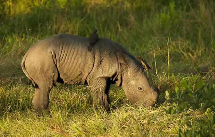 rhino blog2