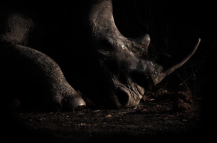 rhino shaddows2