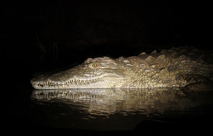 croc shadow