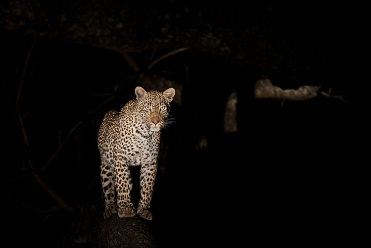 The Nanga female in the darkness of night.