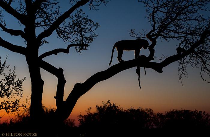 Africa Photographic Travel Photographic Safari and tour at Simbavati.