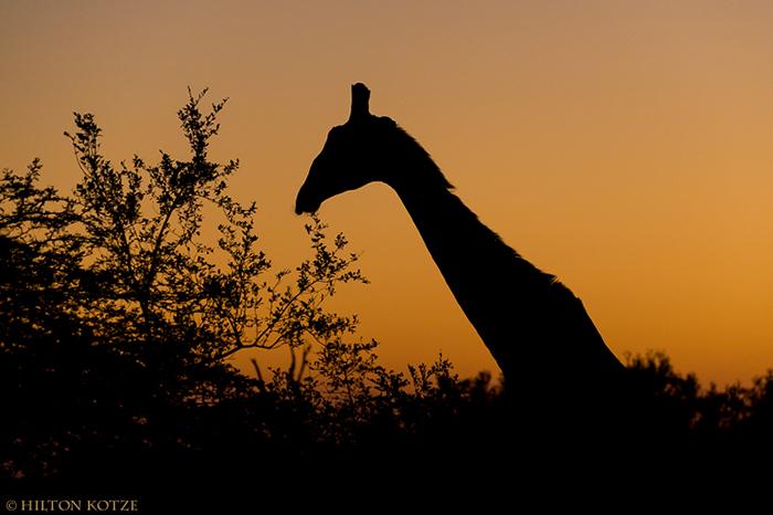 Private-Photographic-safari-Londolozi-428449