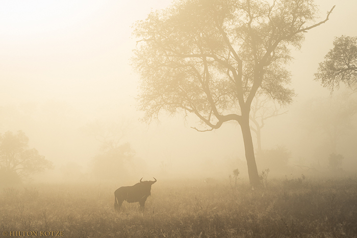 Private photographic safari and tutoring at Londolozi.