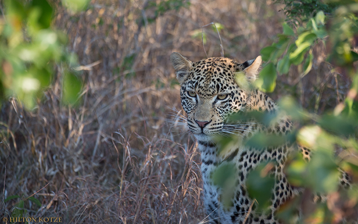 Private photographic safari and tutoring at Londolozi.