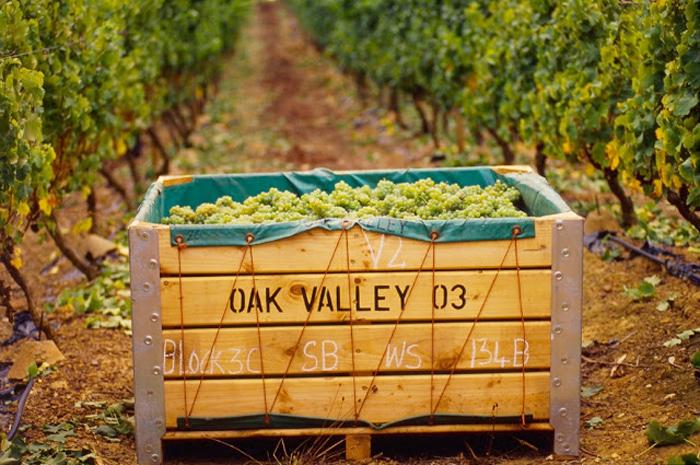 Oak-Valley3-178