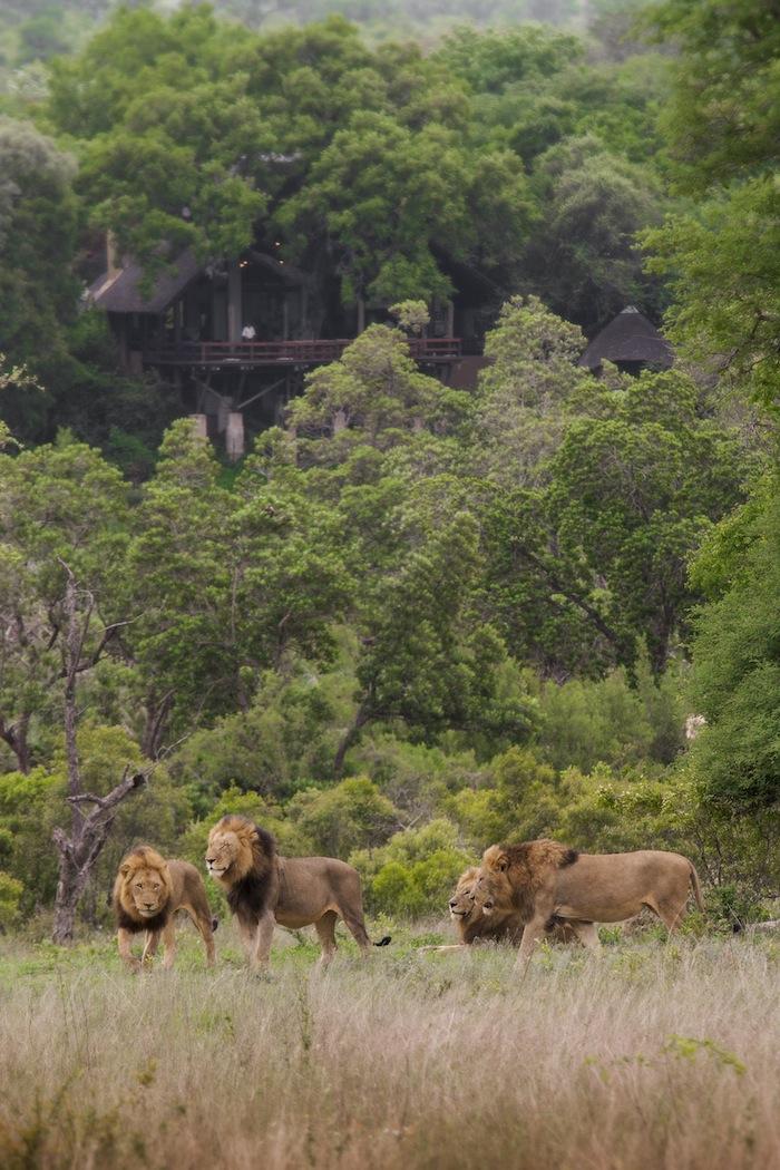 The Majingilane coalition opposite Varty Camp - Photo by James Tyrrell