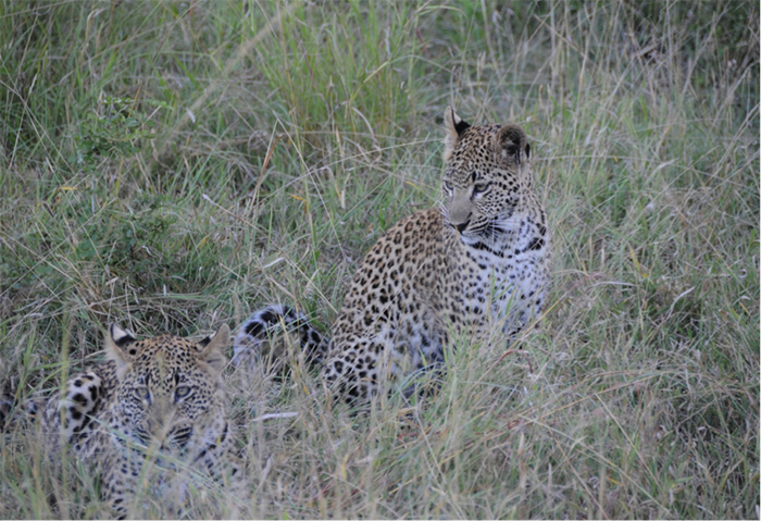 leopard3 copy